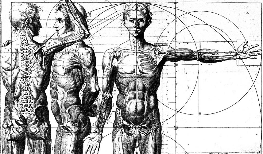 anatomia-masculina