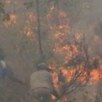 """Incendio en Rocha afectó más de 500 hectáreas y está """"cercado"""""""