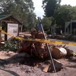La Intendencia se compromete a evaluar el grado de peligro en la totalidad del arbolado en Montevideo