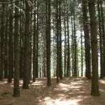 El sector forestal se declara en crisis y pide rebaja de impuestos y exenciones al gobierno