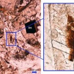 Encuentran tranquilitita en Australia, un mineral exclusivo de la Luna