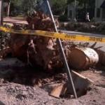 Georadar de antropólogos forenses detecta raíces enfermas en árboles públicos
