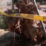 """Oposición: """"los ediles no permitiremos que esto quede como que fue culpa del árbol"""""""