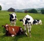 Uruguay prohíbe importar material genético animal de países europeos