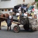 Ciudad Vieja: mujer denuncia que caballo de un carro la mordió