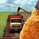Fuerte subida del trigo, maíz y soja por aumento de ventas a China