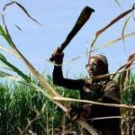 Diputados de Brasil aprueban enmienda a la Constitución sobre trabajo esclavo
