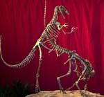 Hallan especie nueva de dinosaurio en Argentina, ancestro de las aves