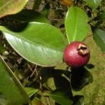 Las bases ecológicas del cultivo de alimentos en armonía con la naturaleza