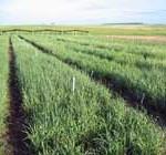 Precio de la tierra subió 7% en seis meses, comparado con el promedio 2011