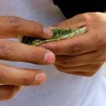 Crean Instituto Nacional de Cannabis: habrá marihuana de cuatro variedades