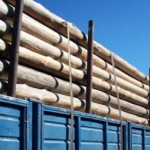 Pastera ENCE vende activos forestales en Uruguay por 77,3 millones de dólares