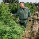 Hay poca y muy mala  marihuana;  acuerdan crear Instituto Nacional del Cannabis