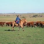 Uruguay recaudará 39 millones de dólares por concepto de Impuesto a la tierra