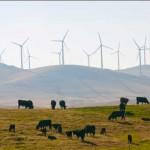 Uruguay camino a desplazar pronto a Dinamarca como líder mundial de productores de energía eólica