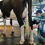 Uruguay exportó el año pasado 246 mil toneladas de lácteos y recaudó 783 millones de dólares