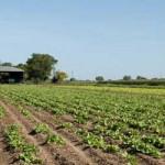 Uruguay no pondrá trabas a la soja pero regulará el manejo de los suelos