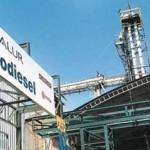 ALUR industrializará 8.000 hectáreas de caña de azúcar y 1.500 de sorgo dulce