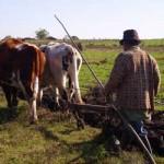 MGAP anuncia este lunes medidas para granjeros afectados por temporales