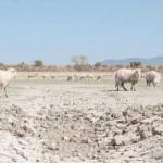 Ganadería destinará 8.000 dólares productores que combinen sistemas agroforestales y ganaderos
