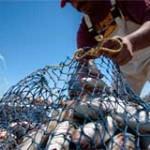 Uruguay regula pesca ilegal con parámetros similares a la Unión Europea