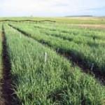 Comisión de Fomento Rural: limitar concentración de la tierra en pocas manos