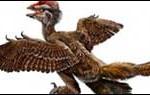 """Descubren las aves más antiguas: tenían cuatro pares de alas como """"biplanos"""""""