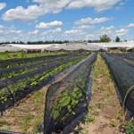"""MGAP considera """"un éxito"""" presentación de planes y uso de manejo de suelos"""