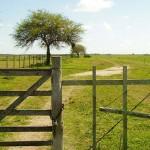 Gobierno prohibirá a Estados extranjeros comprar tierras en Uruguay