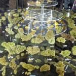 23 de junio: competencia por marihuana en la 2ª Copa Cannabis Uruguay 2013