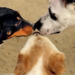 Zoofilia: Suecia refuerza prohibición de sexo con animales