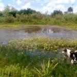 Gobierno controla: erosión de suelos, efluentes, tambos y uso de agroquímicos