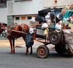 Socialistas culminan plan para erradicar carros de caballos en Montevideo