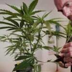 Marihuana: el voto que definirá plan de legalización será de los colorados