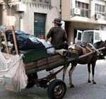Novel director municipal: compromiso de eliminar carros de caballos en las calles