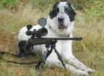 Hombre muere por disparo de escopeta accionada por su perra en Argentina