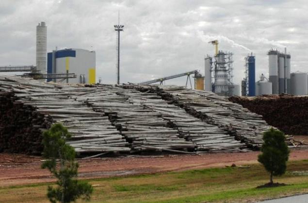 Resultado de imagen para montes de eucaliptus en uruguay