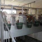 Planta pasteurizadora de leche caprina del PAGRO pasa de vender 50 litros a 700 litros