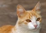 Gatos superan a los perros en cantidad como mascotas en todo Occidente