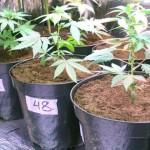 Secretaría de Drogas invierte $ 6 millones para prevenir consumo en el interior