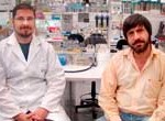 Proteína que convierte el colesterol en provitamina es descubierta en Argentina