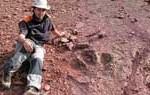 Nueva especie de dinosaurio bípedo carnívoro es descubierta en España