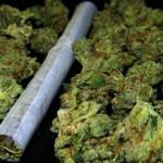 Marihuana legal en Uruguay recabará apoyo popular en toda América Latina (ONG)