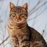"""Gatos desbordan Wikipedia y pasan a ser """"el mejor amigo del hombre"""" en Internet"""