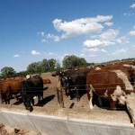 Advierten sobre riesgo de ingreso de aftosa al país por contrabando de Argentina