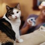 Ejecutivo reglamenta Ley de bienestar animal. Habrá multas desde 1 a 500 UR