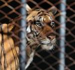 A fin de mes cierra el zoológico Villa Dolores por reformas. Las obras insumirán U$S 500.000