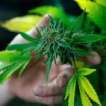 Mujica pidió para esta semana reglamentación de la Ley sobre marihuana