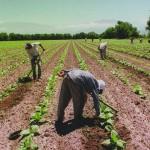 El salario real de los trabajadores rurales aumentó 40 % en los últimos ocho años