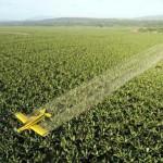 Los alimentos con mayores niveles de pesticidas presentados en informe oficial